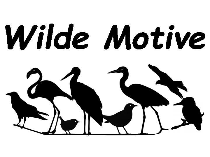 Wilde Motive